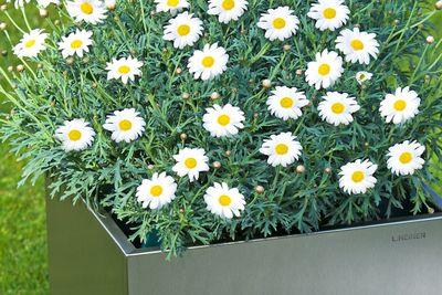 Pflanzcontainer aus Edelstahl von Lizzy Heinen