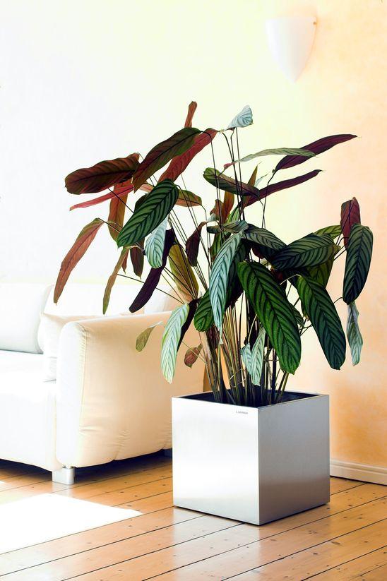 Pflanzenuebertopf aus Edelstahl